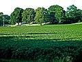 """""""Carpet of Green"""" (985788855).jpg"""