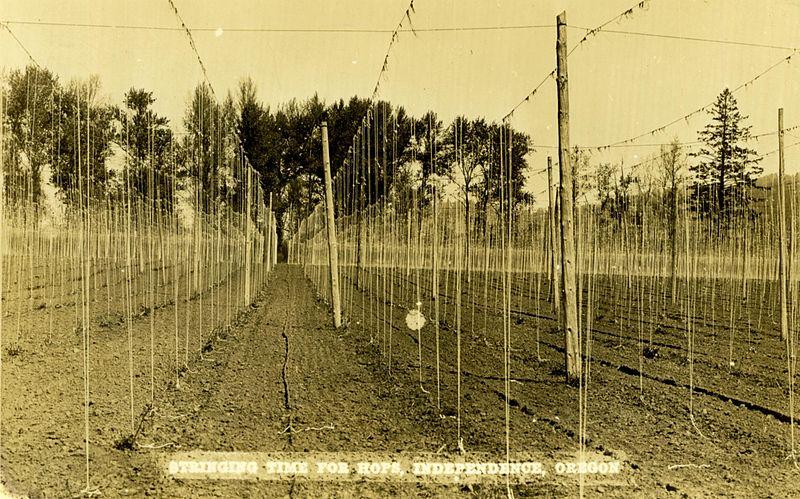 """File:""""Stringing Time for Hops"""" in Independence, Oregon (8113574989).jpg"""