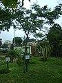 Árbol de Tara en el Jardín Botánico de Lima.jpg