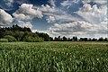 Łopuchówka - panoramio (76).jpg