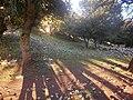 Σφενδαμόδασος Σκύρου 2.jpg