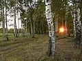 Березовая роща у Которосли в Творогове - panoramio.jpg