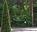 Ботанічний сад НУБіП DSC 0481.jpg