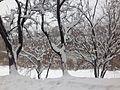 Біла соната, Крошня.jpg