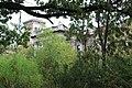 Зарості адвентивних рослин в Ободівському парку.jpg