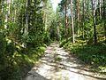 Лесная дорожка - panoramio (11).jpg