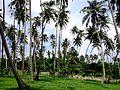 Пальмы - panoramio.jpg