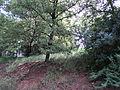 Парк шума Гази Баба во мај (16).JPG