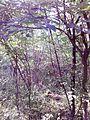 """Парк шума """"Гази Баба"""" 25.jpg"""