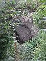 Природни споменик Миоценски спруд Ташмајдан 008.JPG