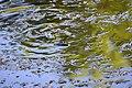 Сирецький гай Черепаха болотна DSC 0995.jpg