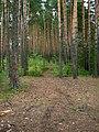 Спировский остров - panoramio.jpg
