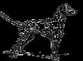 Стати собаки.png