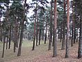 Судрабкалниньш - panoramio.jpg