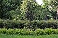 Территория городского сада в Киеве. Весна 2019. Фото 25.jpg