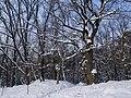 Украина, Киев - Голосеевский лес 80.jpg