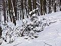 Украина, Киев - Голосеевский лес 83.jpg