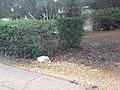 לאורך כביש 5 - מיכל מיכאלי מצלמת (8515720606).jpg