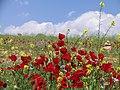 بهار در تپه هاي اطراف درياچه پريشان - panoramio.jpg