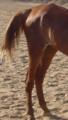 ساقا حصان 8.PNG