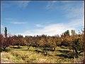 مناظر پاییزی از روستای ینگجه - panoramio.jpg