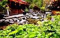 大理 古城的四叶草 - panoramio.jpg