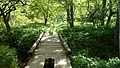 小川にかかる木道 - panoramio.jpg