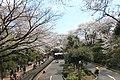 小田原城 - panoramio (5).jpg