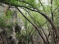 石林风光 - panoramio (18).jpg