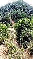 虎门皇帝山20130519 - panoramio (17).jpg