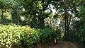 ... typical premises of plantation in Madikeri (32380583384).jpg
