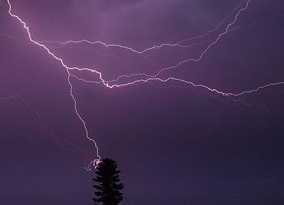 Lightning strike in conifer.