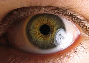 Entrance pupil - The apparent location of the anatomical pupil of a human eye (black circle) is the eye's entrance pupil. The outside world appears to be seen from the point at the center of the entrance pupil. (The pupil itself, which lens designers would call the aperture, is in a slightly different location because the image is magnified by the cornea.)