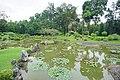 058 Lotus Pond (39756526224).jpg