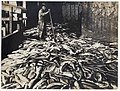 10,000 salmon on cannery wharf and Chinese worker, ca 1900 (MOHAI 6987).jpg
