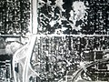 1956 aerial photo of the Martin Drive Neighborhood.jpg