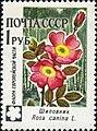 1960 CPA 2501.jpg