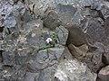 2008-05-16 12 39 24 Iceland-Gilsbakki.jpg