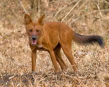 Nagarhole National Park - Wikipedia