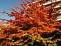 2011-10-31-160303 .JPG - panoramio.jpg