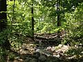 2013-05-12 11 42 55 Stream along the Hoeferlin Trail in Ramapo Mountain State Forest.JPG