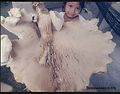 2014-10-10 Termitomyces titanicus Pegler & Piearce 467309.jpg