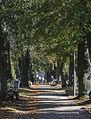 2014 Cmentarz w Kłodzku, główna aleja, 02.JPG