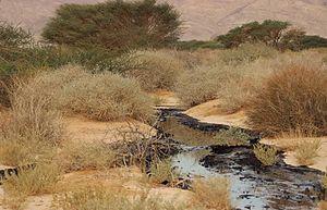 2014 Israeli oil spill - Image: 2014 Israeli oil spill in Evrona nature reserve (2)