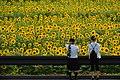 2017-07-15 Ono-himawarino-oka-park (小野市立ひまわりの丘公園) 6274☆彡.jpg