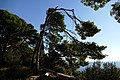 30.12.16 Dubrovnik Lovrijenac Gradac Park 46 (31607518780).jpg