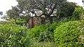 83230 Bormes-les-Mimosas, France - panoramio (18).jpg