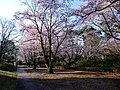 AIST Sakura - panoramio (3).jpg