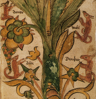 Dáinn, Dvalinn, Duneyrr and Duraþrór - This drawing made by a 17th-century Icelander shows the four stags on the World Tree. Neither deer nor ash trees are native to Iceland.