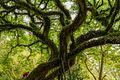 A árvore da vida.jpg